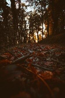 Foresta lunatica in autunno