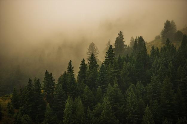 Foresta nebbiosa del colorado