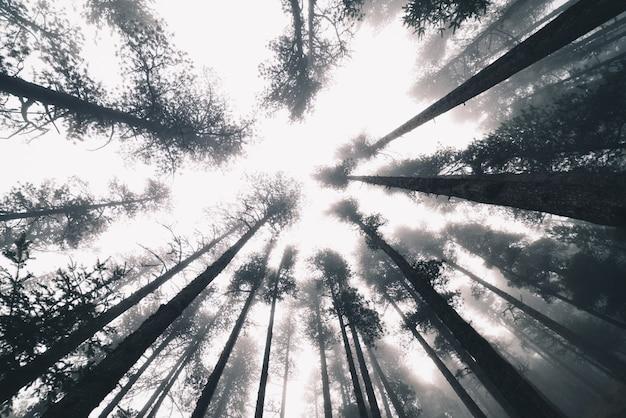 Foresta nebbiosa in inverno con alberi