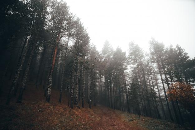 Foresta nebbiosa in una mattina d'autunno