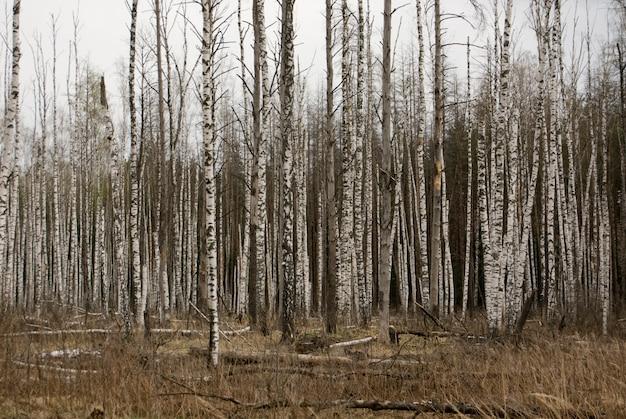 Foresta nuda