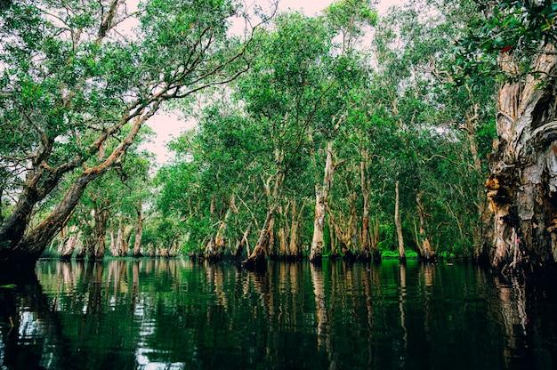 Foresta palustre con fiume nella giungla