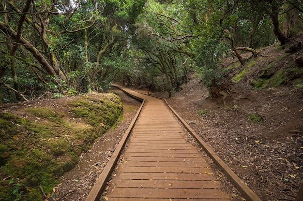 Foresta pluviale di anaga nell'isola di tenerife, isole canarie, spagna.