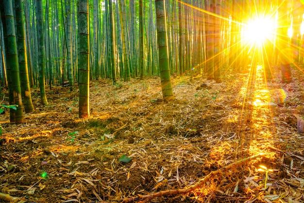 Foresta pluviale di crescita esterna giapponese vitalità