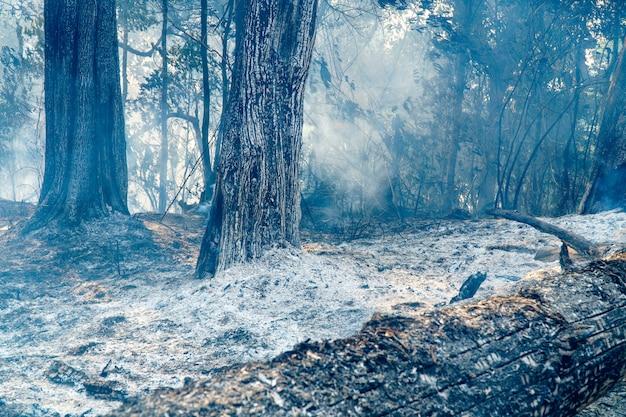 Foresta pluviale dopo il disastro del fuoco causato dagli umani
