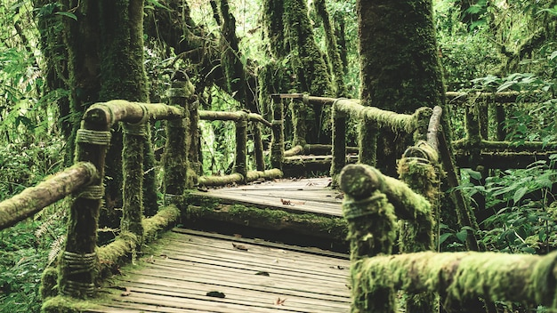 Foresta pluviale nel parco nazionale di doi inthanon, tailandia