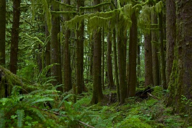 Foresta pluviale nortwest usa