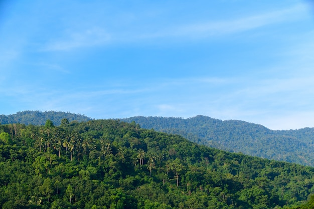 Foresta pluviale tropicale a khao luang con cielo blu