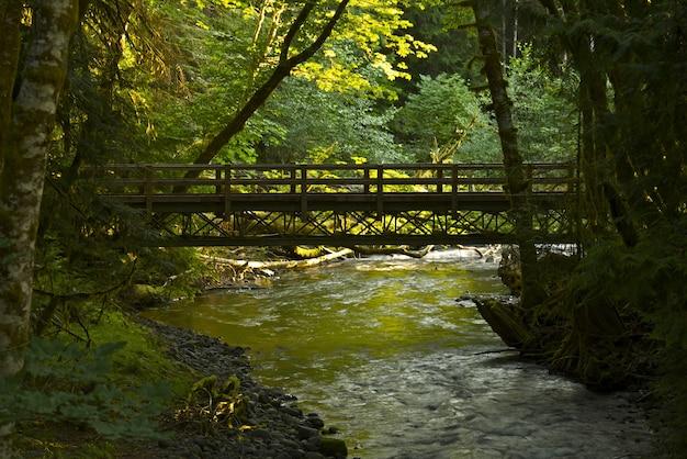 Foresta ponte