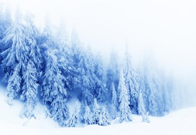 Foresta profonda di inverno con gli alberi della pelliccia e fumo bianco il giorno di inverno
