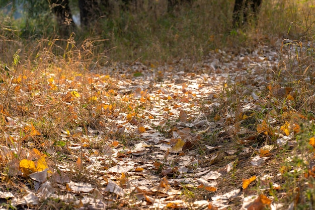 Foresta selvaggia d'autunno.