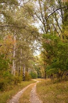 Foresta selvaggia d'autunno