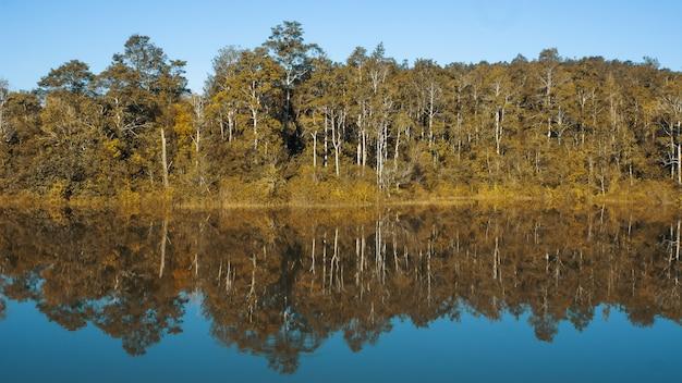 Foresta sul lago