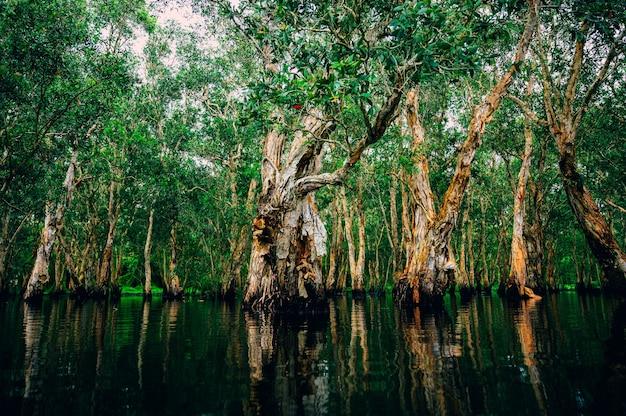 Foresta tropicale con fiume nella giungla