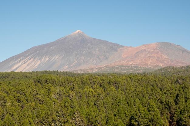 Foresta verde con la montagna su cielo blu