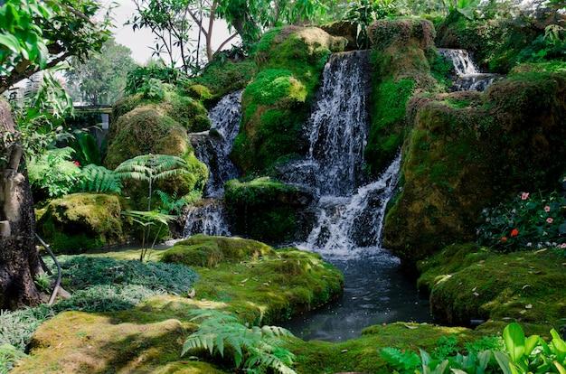 Foresta verde e cascata