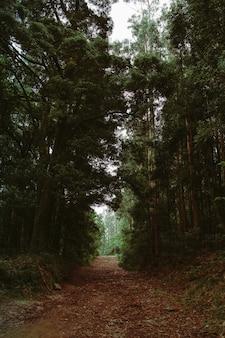 Foresta verde e marrone