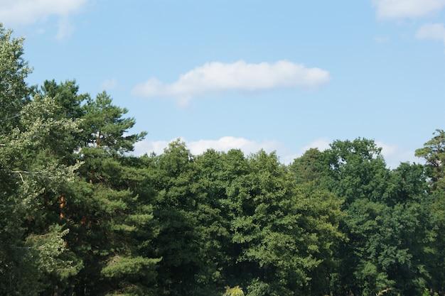 Foresta verde in una luminosa giornata di sole