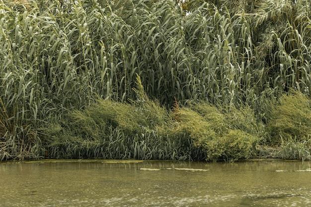 Foresta vicino a un paesaggio fluviale