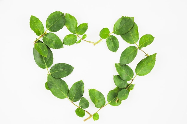 Forma del cuore fatta con foglie verdi su sfondo bianco