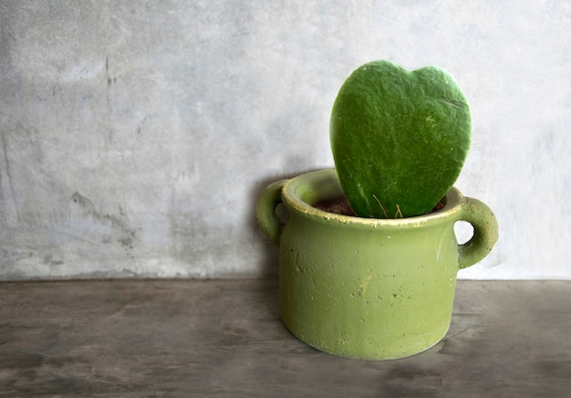 Forma di cuore di cactus in vaso