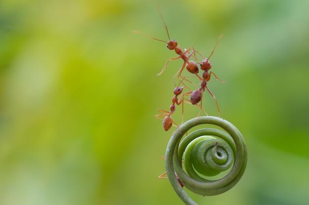 Formica a piedi sulla pianta a spirale
