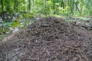 Formicaio del suolo