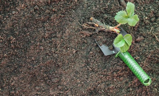 Forniture per terreni e giardinaggio. giardino. messa a fuoco selettiva