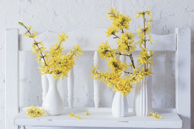 Forsythia in vaso su sfondo bianco
