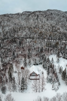 Foto aerea di alberi verdi