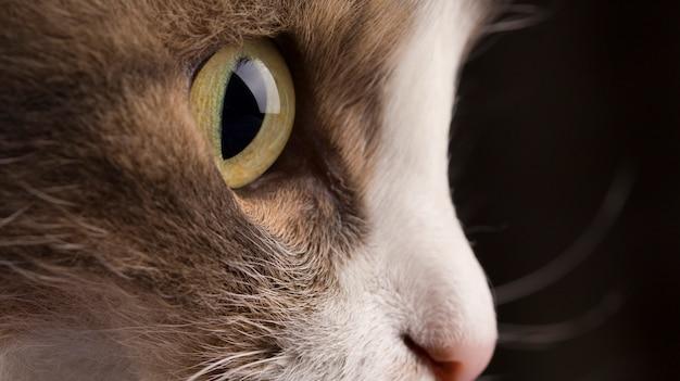 Foto del primo piano della testa di un gatto grigio con gli occhi verdi