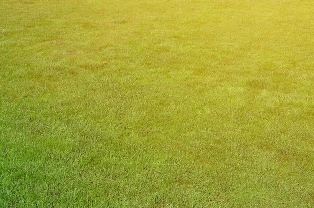 Foto del sito con erba verde uniforme. prato o vicolo di erba verde fresca