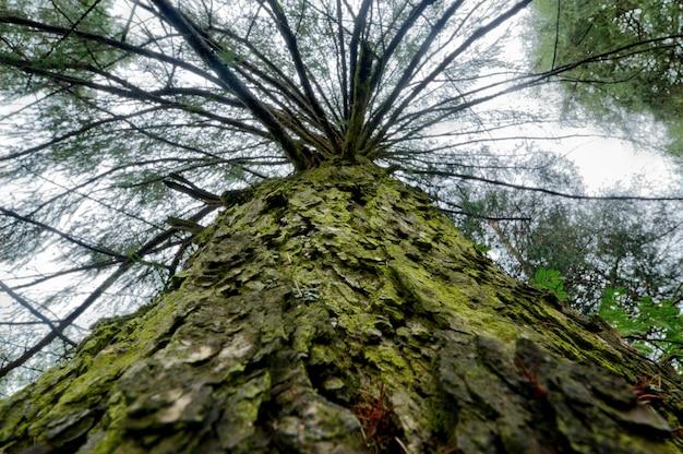 Foto di angolo basso dell'albero