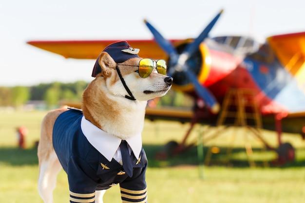 Foto divertente del cane shiba inu