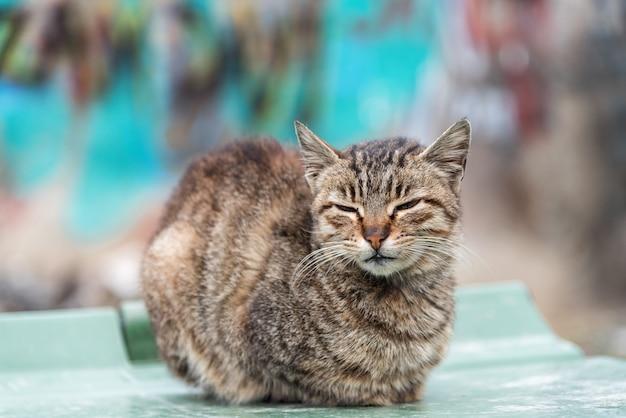 Foto simpatico gatto nel vecchio quartiere di istanbul