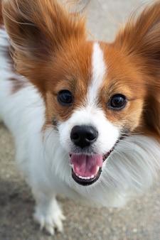 Foto verticale ritratto di un cane