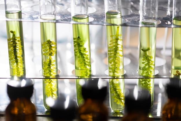Fotobioreattore nell'industria delle biocarburanti a base di alghe da laboratorio
