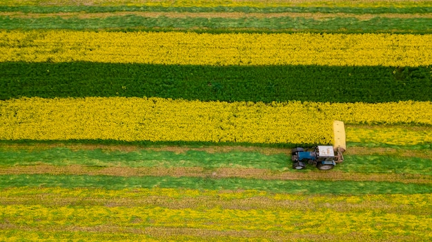 Fotografia aerea del trattore del seme di ravizzone di falciatura con un fuco