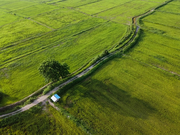 Fotografia aerea, risaie verdi nelle zone rurali, tailandia