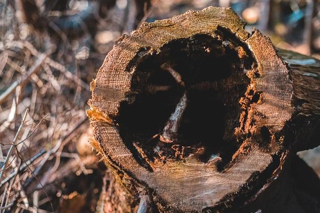 Fotografia alta vicina di legno di inizio attività di brown