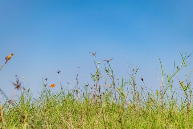 Fotografia di erba del sole vista la natura