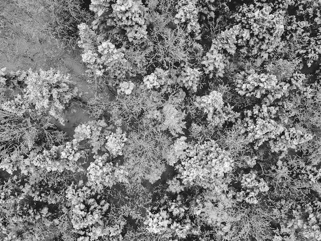 Fotografia in scala di grigi di alberi