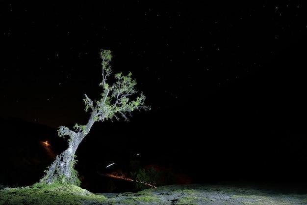 Fotografia notturna di un albero molle (schinus molle)