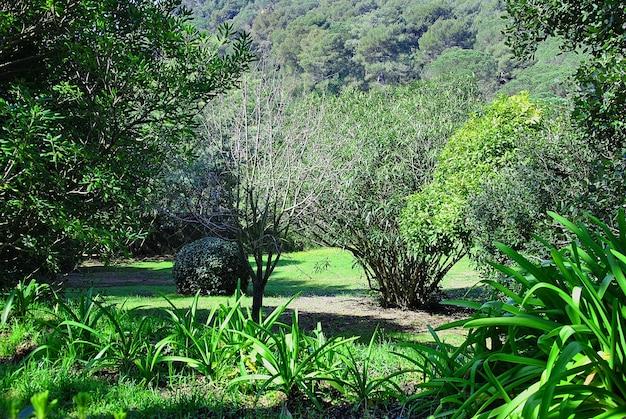 Fotografia scattata in una lussureggiante foresta in primavera