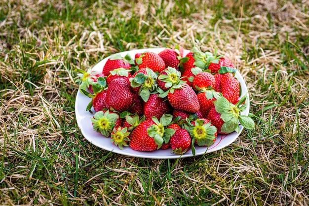 Fragole dolci che si trovano su un piatto bianco su un prato inglese verde.