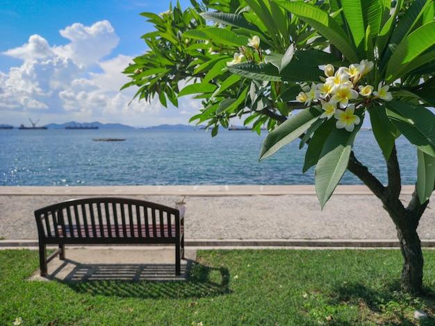 Frangipane, albero di plumeria accanto alla spiaggia su koh sichang, chonburi, tailandia.