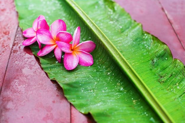 Frangipane rosa del gruppo su foglia di palma verde