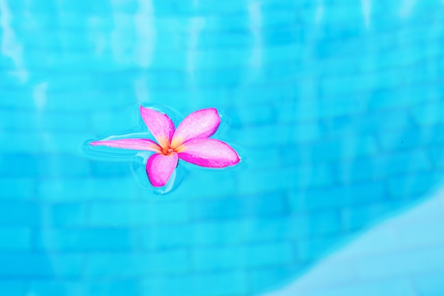 Frangipani rosa in piscina con acqua turchese