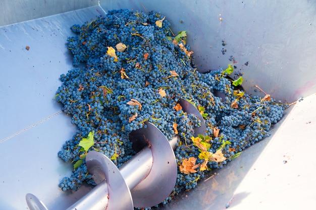 Frantoio a cavatappi diraspatore vinificazione con uva