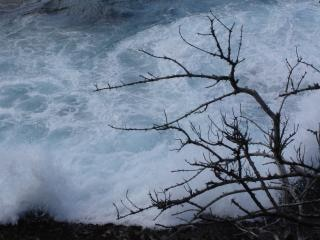 Frenata onde dietro un albero